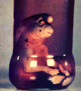 The preserved remains of the Gnome of Girona. (Image credit/source here.)